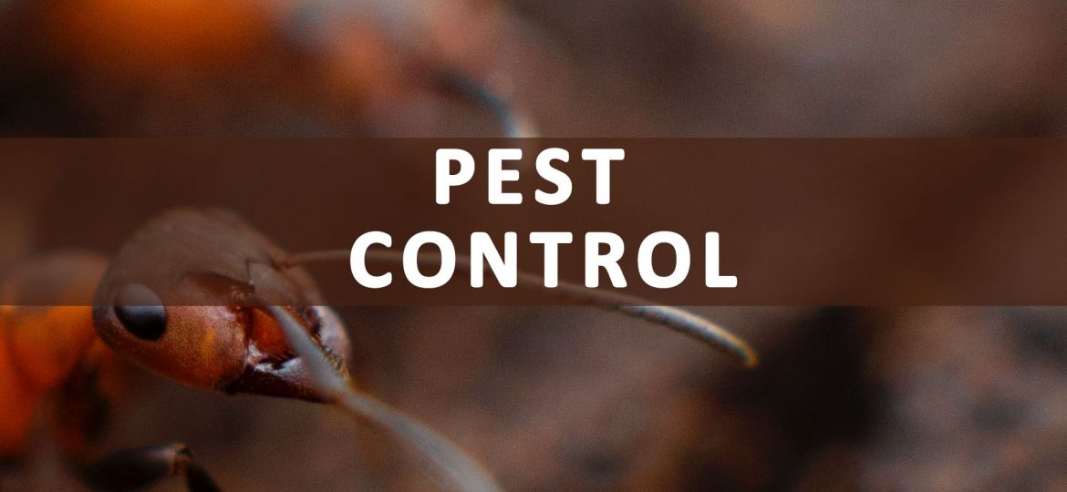 Pest-Control-Service-payments-Recovered